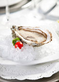 Oysters on ice, small dof — Stock Photo