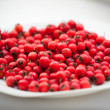 Hawthorn berries - Stock Photo
