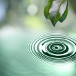Stock Photo: Green leaves with water drop above water