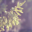 Spruce twig — Stock Photo #11818275