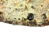 Cassiterite crystal in a rock — Stock Photo