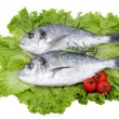 Bream fish on white background — Foto de Stock