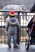 Little boy watching the elephant in the zoo — Stock Photo