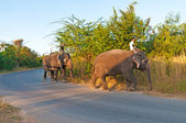 Riding on elephants — Fotografia Stock