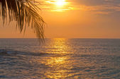 Sunrise over the sea and the palm leaves — Stock Photo