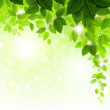 Summer branch with fresh green leaves — Stock Vector #11908395