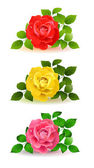 Three color roses with green leaves — Stock Vector