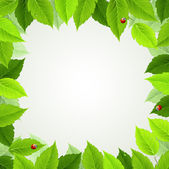 Telaio con foglie verdi fresche e coccinelle — Vettoriale Stock