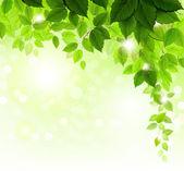 Filial de verão com folhas verdes frescas — Vetor de Stock