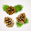 Branch of fir tree and cones - Stock Vector
