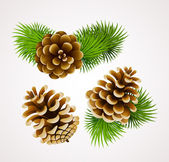 Branch of fir tree and cones — Stock Vector