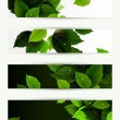 Headers set of four banners of the environment — Stock Vector #11933815