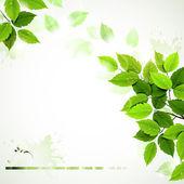 Rama de verano con hojas verdes frescas — Vector de stock