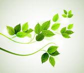 Rama de primavera con hojas verdes frescas — Vector de stock