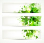 Satz von drei banner mit frischen grünen blättern — Stockvektor