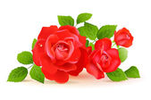Red roses with green leaves — Stockvektor