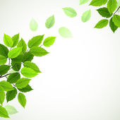 Branch with fresh green leaves — Stockvector