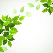 Rama con hojas verdes frescas — Vector de stock