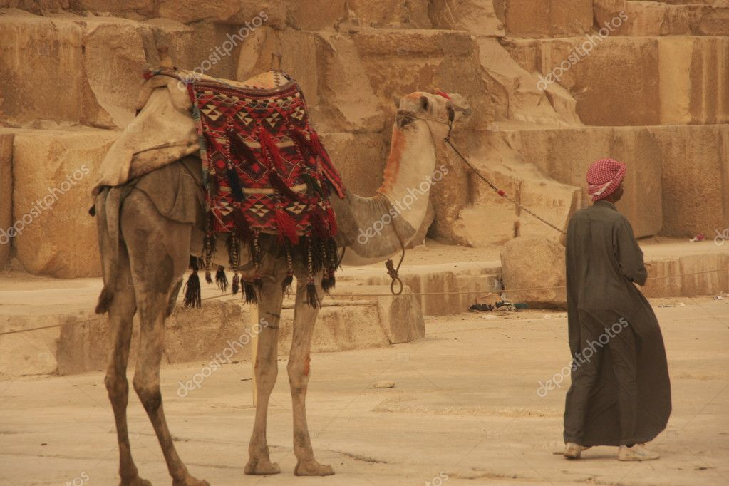 Camel and camel man at Giza Pyramids, Cairo, Egypt  Stock Photo #11906989