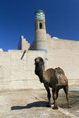 Camel in fron of the wall — Stock Photo