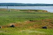 Marsh on Plum Island — Stock Photo