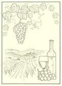 Vineyard illustration — Stock Photo