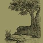 Old tree illustration — Stock Photo