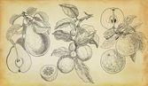 Handdrawn abbildung mix aus früchten — Stockfoto