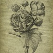 Old rose illustration — Stock Photo #11896204