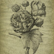 Stock Photo: Old rose illustration