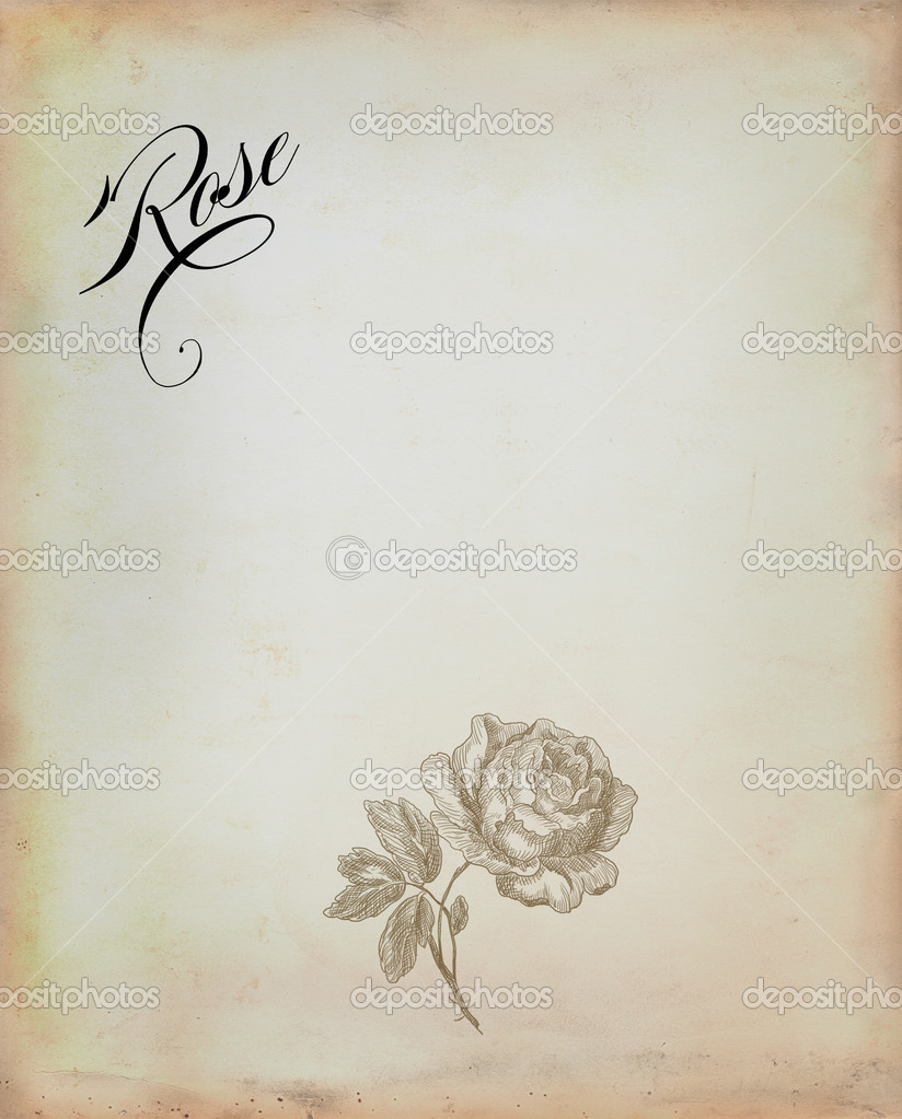 Old rose illustration  — Stock Photo #11936756