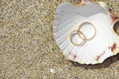 Two weddings rings on shell — Stock Photo