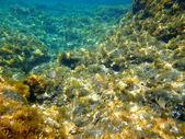 Sea bottom — Stock Photo