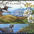 Royalty-Free Stock Photo: NEW ZEALAND - CIRCA 1993: Postage stamps printed in New Zealand, shows the Taiko, Mount Cook lily, blue duck, circa 1993