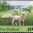 NEW ZEALAND - CIRCA 1995: A stamp printed in New Zealand, shows farm animals - sheep, circa 1995 — Stock Photo