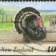 NEW ZEALAND - CIRCA 1995: A stamp printed in New Zealand, shows farm animals - turkey, circa 1995 — Stock Photo