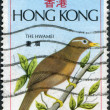 HONG KONG-CIRCA 1975: A stamp printed in the Hong Kong, shows Brown Laughing Thrush, circa 1975 — Стоковая фотография