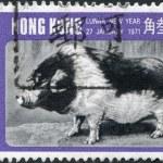 HONG KONG - CIRCA 1971: A stamp printed in the Hong Kong dedicated to the Chinese New Year, shows a wild boar, circa 1971 — Stock Photo #11973740