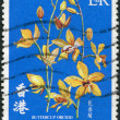 Royalty-Free Stock Photo: HONG KONG - CIRCA 1977: A stamp printed in the Hong Kong shows Buttercup Orchid, circa 1977