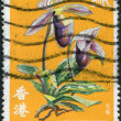 HONG KONG - CIRCA 1977: A stamp printed in the Hong Kong shows Lady's-slipper, circa 1977 - Foto Stock