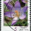GERMANY - CIRCA 2005: A stamp printed in Germany, shows a flower, Crocus tommasinianus, circa 2005 — Stock Photo