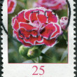 GERMANY - CIRCA 2008: A stamp printed in Germany, shows a flower, Dianthus caryophyllus (Clove Pink), circa 2008 — Stock Photo #11973935