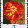 GERMANY - CIRCA 2005: A stamp printed in Germany, flower shows, Tagetes, circa 2005 - Stock Photo