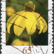 GERMANY - CIRCA 2006: A stamp printed in Germany, shows a flower, Rudbeckia (Rudbeckia fulgida Ait), circa 2006 - Stock Photo