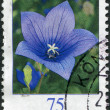 GERMANY - CIRCA 2011: A stamp printed in Germany, shows a flower Platycodon grandiflorus, circa 2011 — Stock Photo