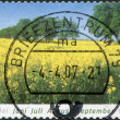 GERMANY - CIRCA 2006: A stamp printed in Germany, shows a flowering summer field, circa 2006 — Stock Photo