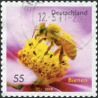 GERMANY - CIRCA 2010: A stamp printed in Germany, shows a honey bee, circa 2010 — Stock Photo #11974147