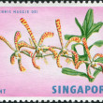 SINGAPORE - CIRCA 1963: A stamp printed in Singapore, shows Arachnis Maggie Oei, circa 1963 — Stock Photo #11974271