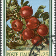 Stock Photo: ITALY - CIRC1967: stamp printed in Italy, shows wild apple variety Malus sieversii, circ1967