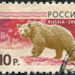 RUSSIA - CIRCA 2008: A stamp printed in Russia, shows a brown bear (Ursus arctos), circa 2008 - Stock Photo